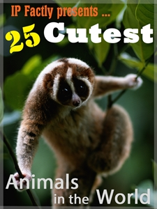 25 cutest animals in the world