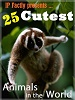 25-cutest-animals-in-the-world-300