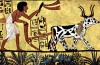 Ox_Drawn_Plow_ancient_egypt