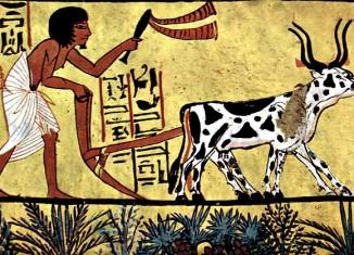 Ox_Drawn_Plow_ancient_egypt