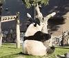 Panda_Falling_from_Tree