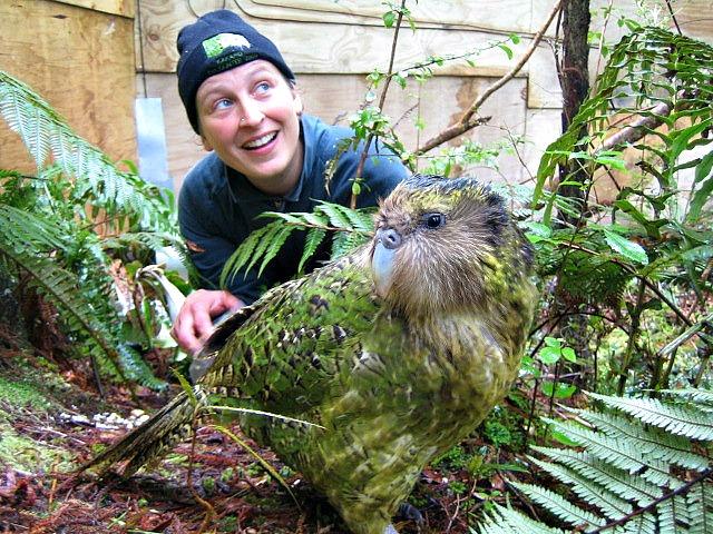 Sirocco_kakapo