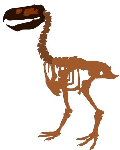 terror_bird_Paraphysornis_skeleton
