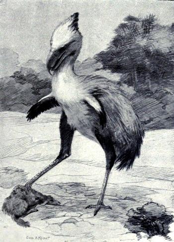 terror_bird_Phorusrhacos