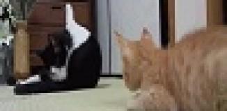 Cat_Prank_Fail