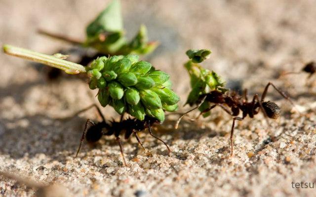 Ants_lifting