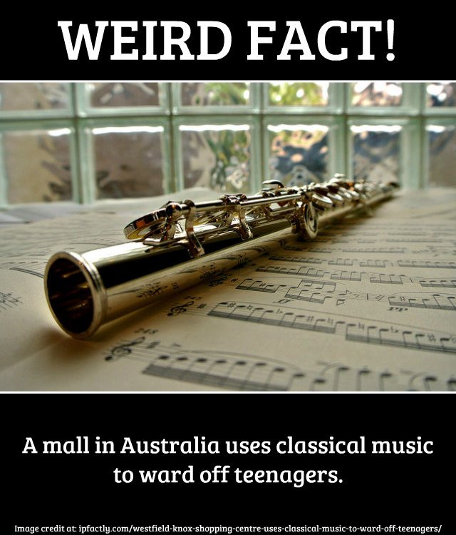 classical_music_instrument