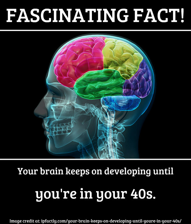 Your brain keeps on developing until you\'re in your 40s. | Fun Facts ...