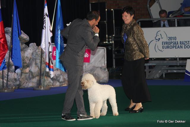 The Lagotto Romagnolo Winner of FCI Group 8