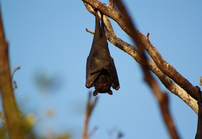 Top 10 Facts About Bat...