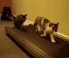 Cats on a Treadmill