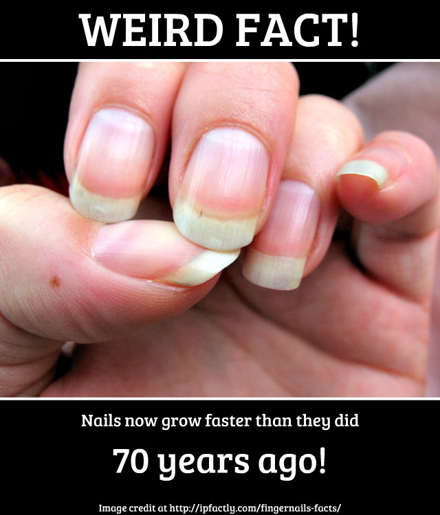 Nails now grow faster than they did 70 years ago. | Fun Facts You ...