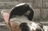 hangover panda