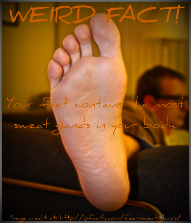 Your feet contains the most sweat glands in your body. | Fun Facts ...