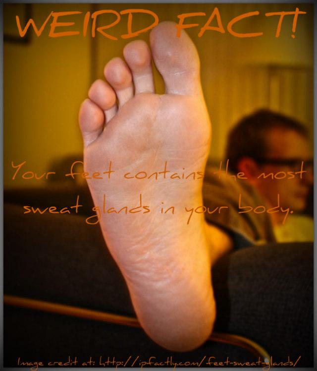 feet sweat glands