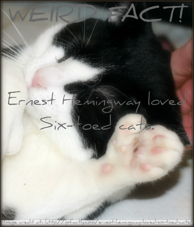 Ernest Hemingway loved six-toed cats. | Fun Facts You Need