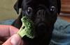 Brocolli Dog