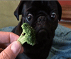 Brocolli Dog