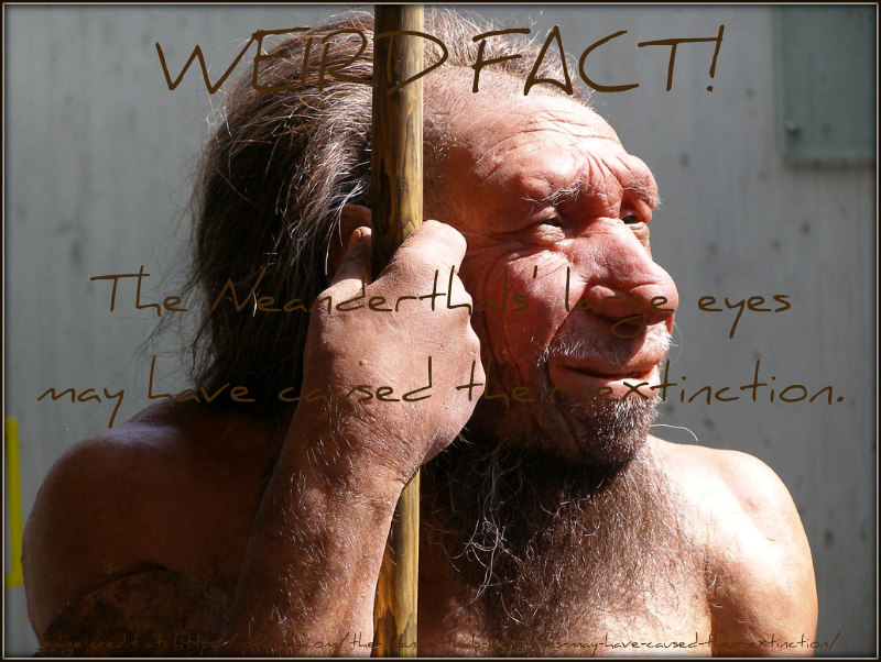 a history of the neanderthal species and the cause of extinction Sudden extinction of neanderthals followed natural history neanderthals once might have caused the extinction of the neanderthals on the.
