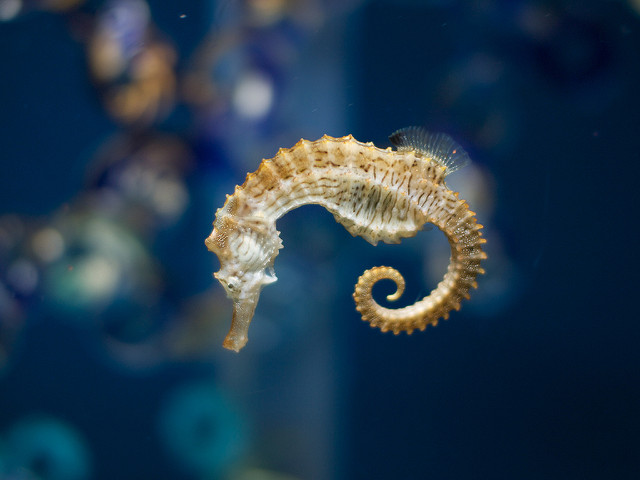 six weird facts about seahorses always learning
