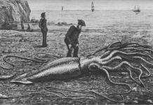 Gravure d'un calmar géant échoué en 1877 sur la baie Trinity, à Terre-Neuve