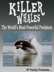 Killer Whales! The World's Most Powerful Predators!
