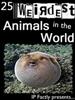 25 Weirdest Animals in the World!