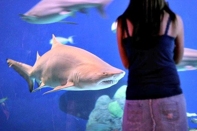 sand-tiger_shark_Denver_Aquarium