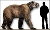 Short Faced Bear