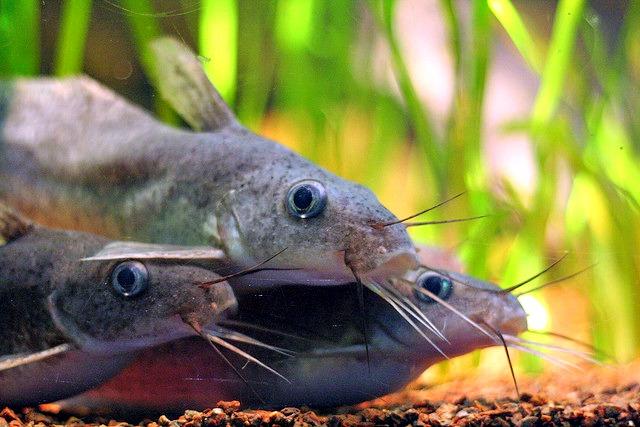 Quiz 101 of fish dating 2