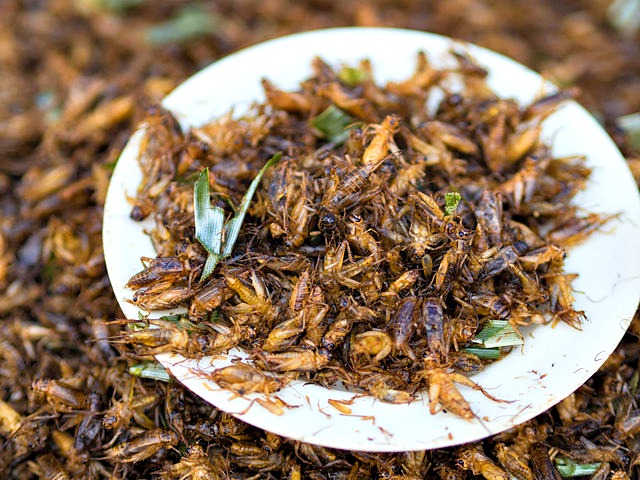 Crickets as food_Chingrit_thot