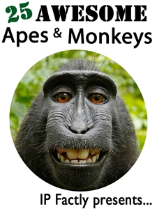 25 Awesome Apes and Monkeys!