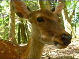 Deer by rumpleteaser cc2.0