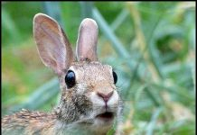04-Rabbit_Looks_Surprised_by_Monique_Haen