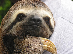 Sloth by Praziquantel