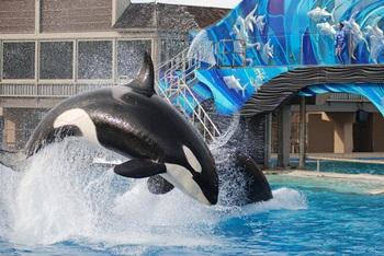 One Ocean (Killer Whale Show) @ Sea World