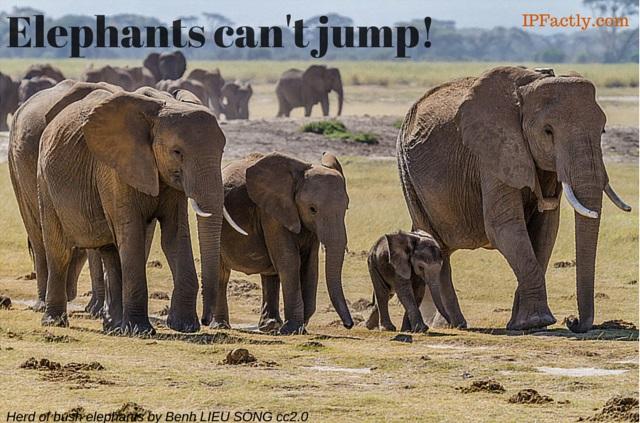 Herd of bush elephants