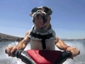 dog on jetski