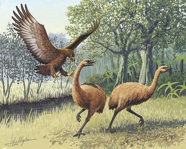 Giant Haast's eagle attacking New Zealand moa