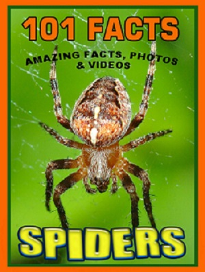 Spider Facts