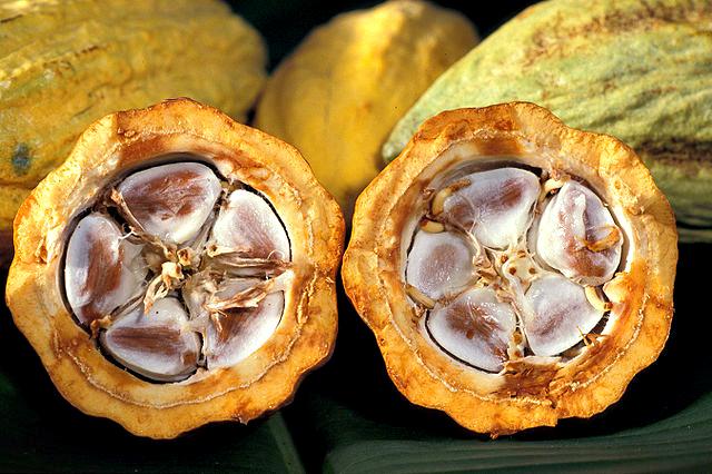 Cacao-pod