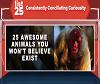 25-awesome-bizarre-animals