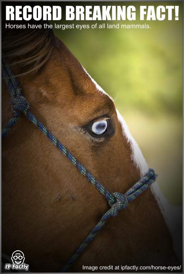 Blue Eye Horse