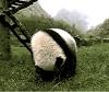 panda roll
