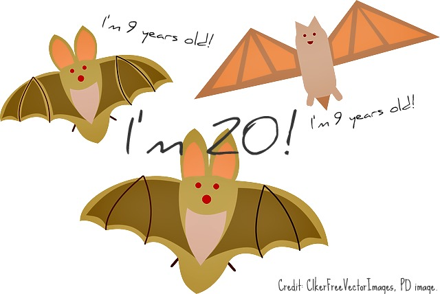 vampire_bat_life_span