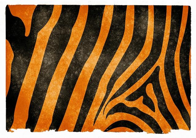 Tiger_Stripe