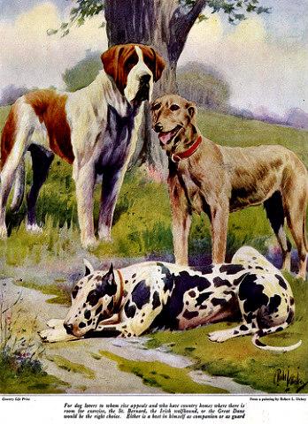 Large_dog_breeds