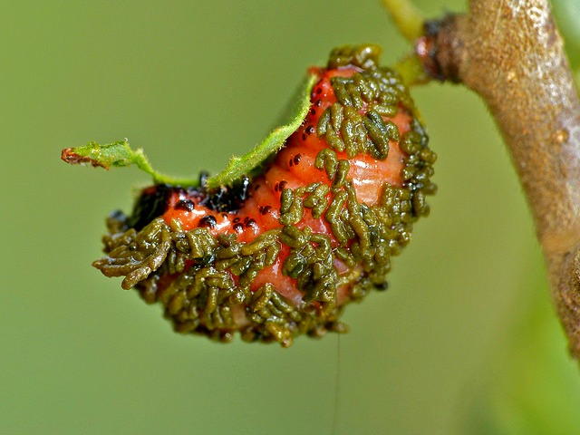 Interesting Facts About Insects Top
