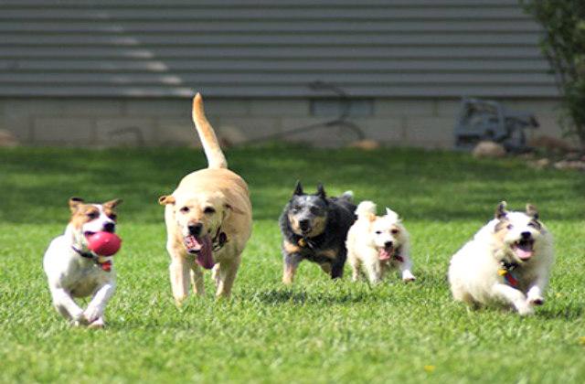 main-smart-dogs