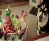 Siberian Husky Stops Baby Crying